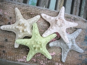 Starfish Furniture Knobs ~ Vintage Finish